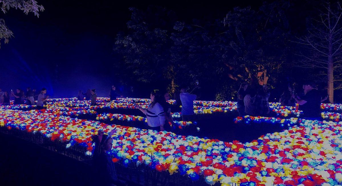The Nightgarden illuminated floral maze at Fairchild Botanical Garden